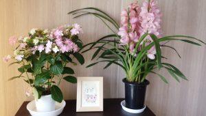笑顔とお祝いの花